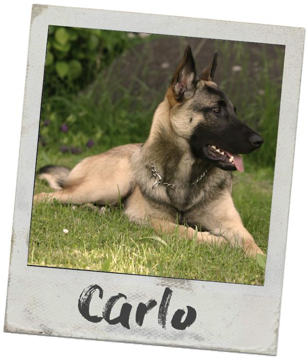 Physio- und Osteopathiepraxis für Hunde-anima-natura carlo