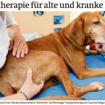 Reportage über Hunde-Physio und Ostheopathie
