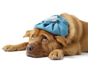 anima-natura.com Physio- und Osteopathiepraxis für Hunde