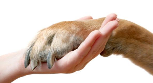ABC für Hunde mit Arthrose von Susanne Steiger - anima-natura