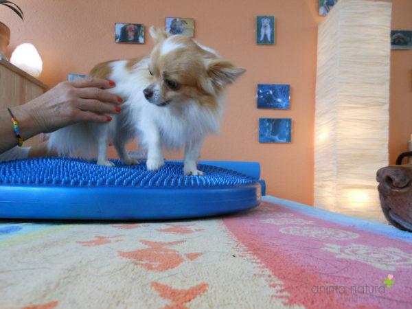 stabilisierende-isometrische-uebung-fuer-Hunde