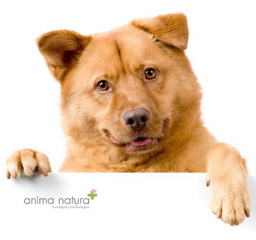 Kurse 2017-fröhlicher gesunder Hund