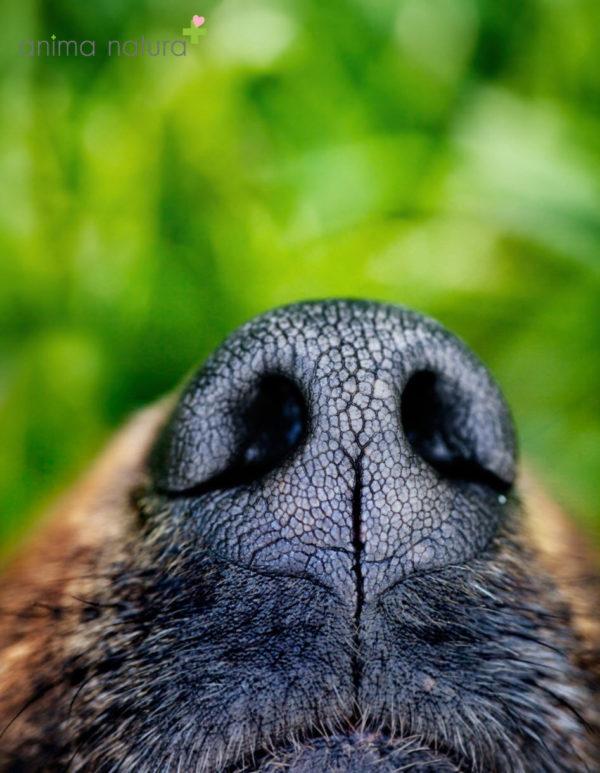 Therapieformen-atemtherapie-hundeschnauze-anima-natura