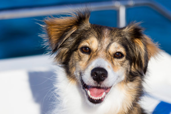 Klassische Hunde Physiotherapie