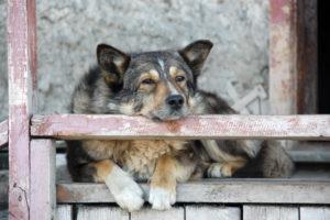 älterer, zufriedener Hund, anima-natura