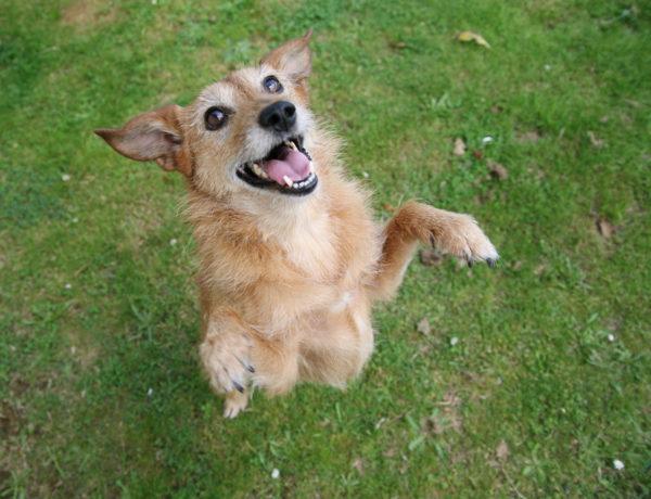 Therapieformen-anima-natura-Wellness-für-den-älteren-Hund