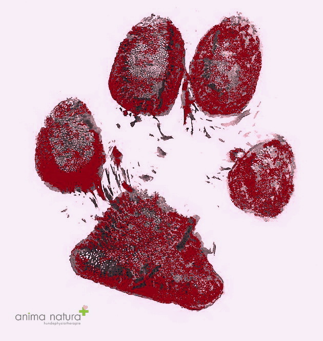 gallerie-hundepfoetli-anima-natura