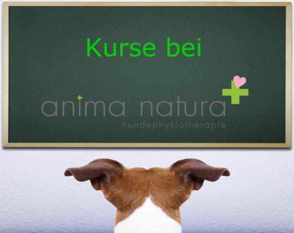Kurse bei Anima-Natura_2018