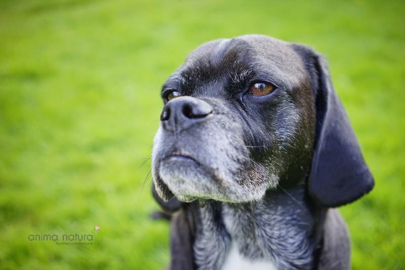Der ältere Hund_anima natura